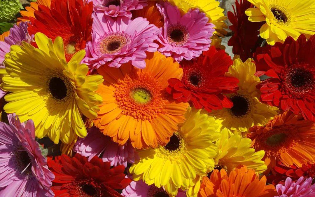 Blumen machen glücklich